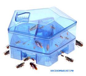 Домик-ловушка для тараканов